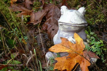 fall frog